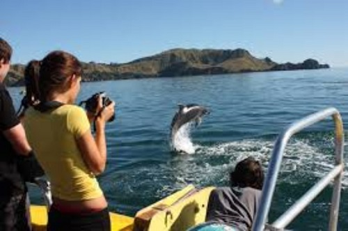 People on a boat looking at dolphins, Bay of Islands, Nw Zealand