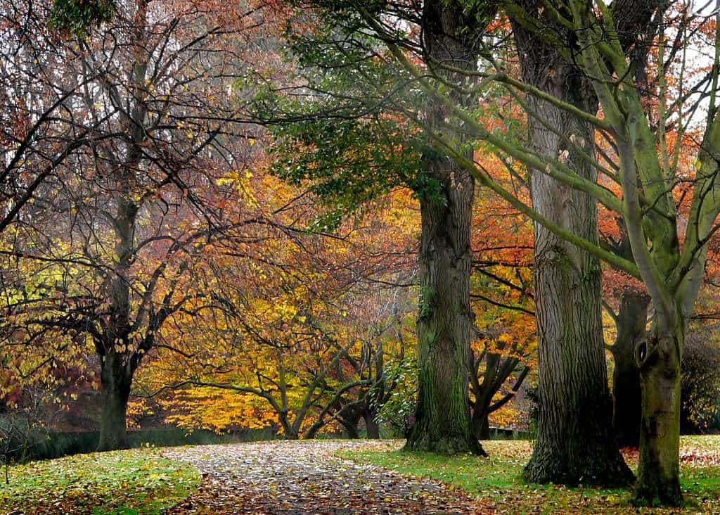 Hagley Park Christchurch New Zealand