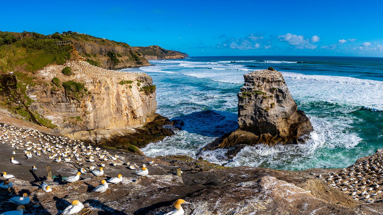 Birds nesting on seaside rocks
